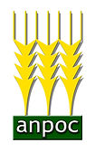 Logo Anpoc.jpg