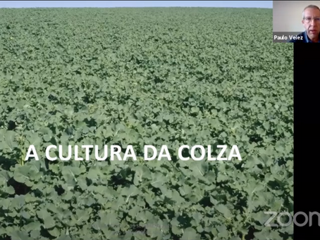 Paulo Velez (CERSUL) - A Cultura da Colza