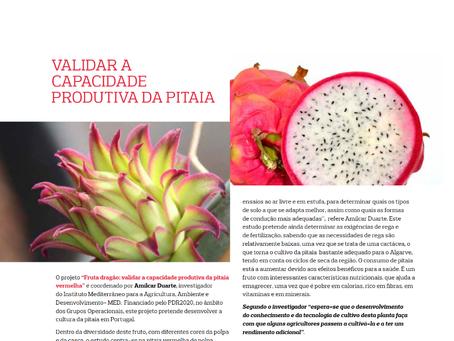 Validar a capacidade produtiva da Pitaia | Revista UALGZINE