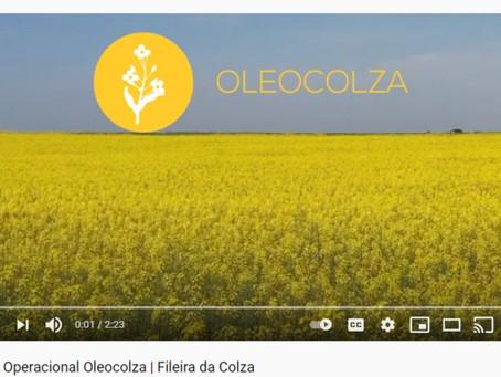 Apresentação do vídeo de introdução do GO Oleocolza | Fileira da Colza