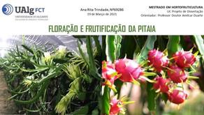 PROJETO DE DISSERTAÇÃO: Floração e Frutificação da Pitaia