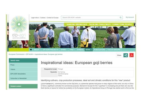 Artigo EIP-AGRI Inspirational ideas: European goji berries