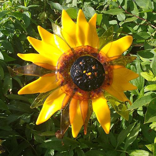 Individual Sun Flower