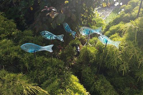 Individual Fish