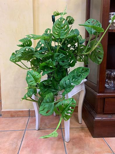 seccion_plantas.jpeg