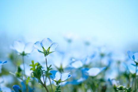 bluebackgrond.jpg