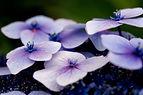 purpleflowers.jpg