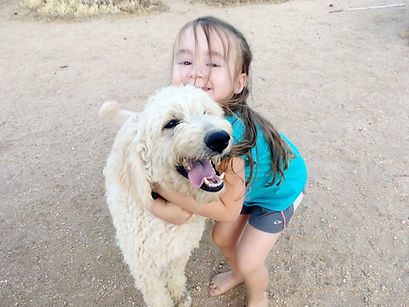 f2b golden doodle puppies for sale southern california