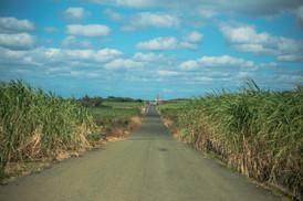 沖永良部島の風景