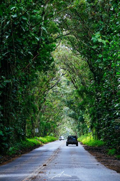 Koloa Tunnel, Kauai.jpg