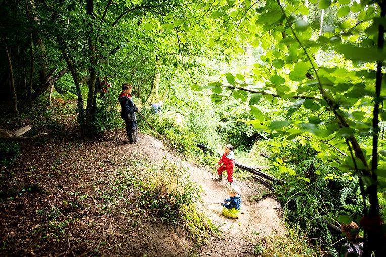 Toothill woods.jpg