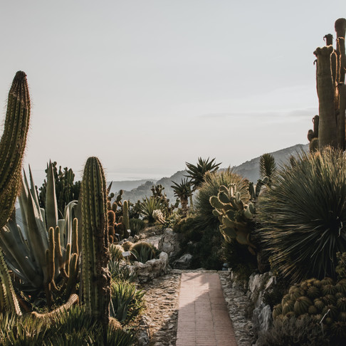 The Hopeful Future of Leather: Cactus-Sourced Material as an Alternative