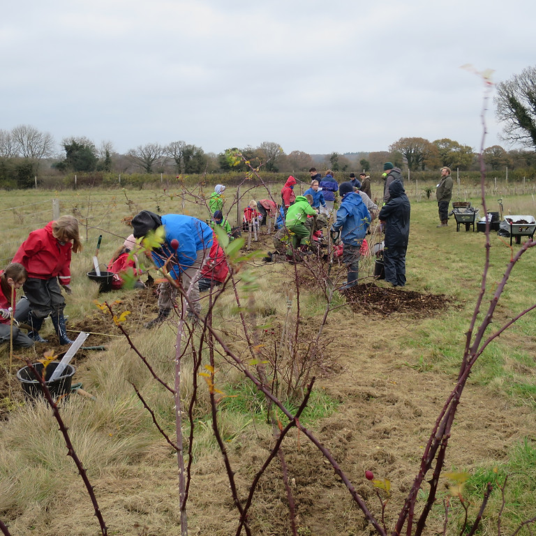 Plant your own tree in Harmony Woods