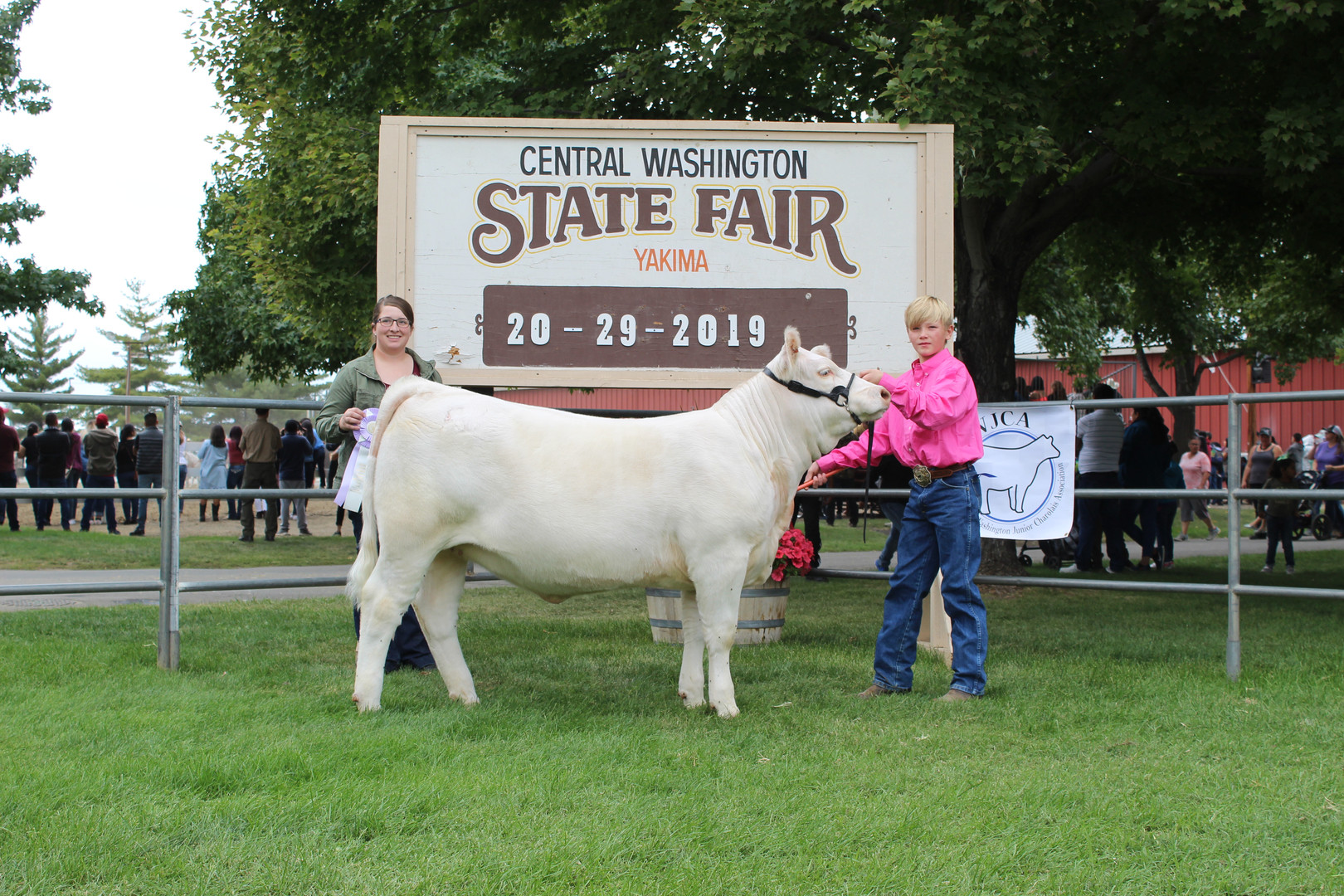 Junior Show Reserve Grand Champion Femal