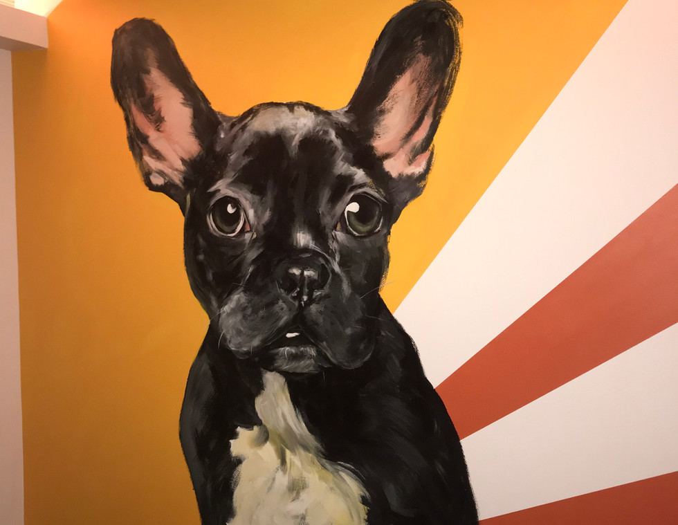 Pierre the Frenchie