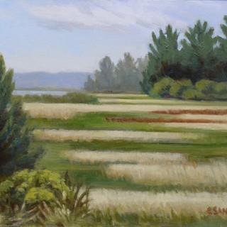 Carol Sandor_Marshes near Willapa Bay  1