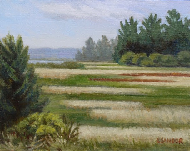 Carol Sandor_Marshes near Willapa Bay  1