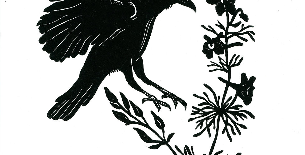 Crow and Black Delphiniums