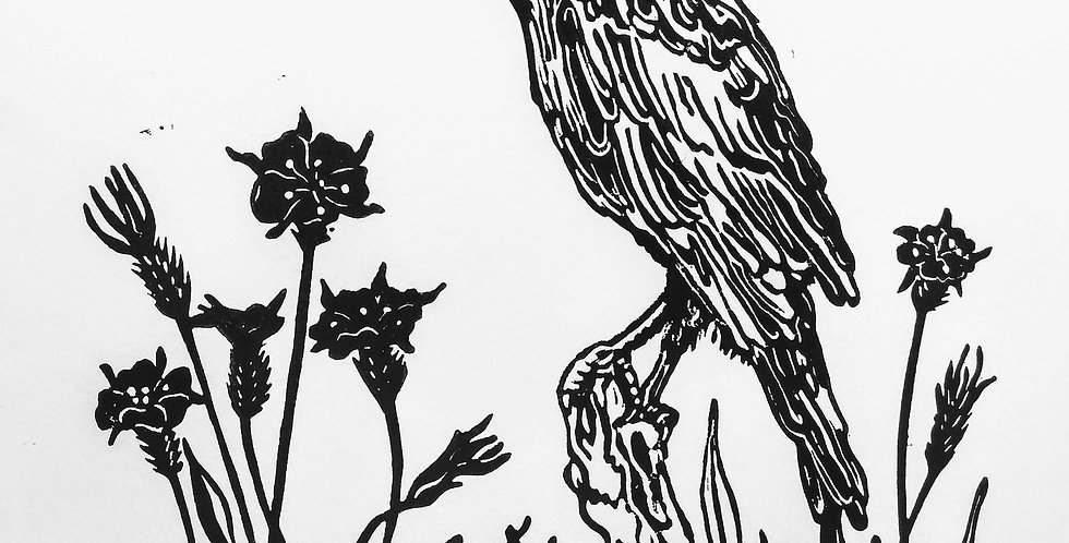 Raven and Corncockles