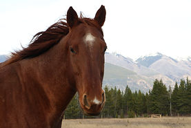 Horse in the wind in front of mountains