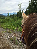 View on trail ride