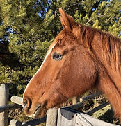 Willow, the horse that gave the ranch it's name
