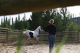 Horse whispering demo