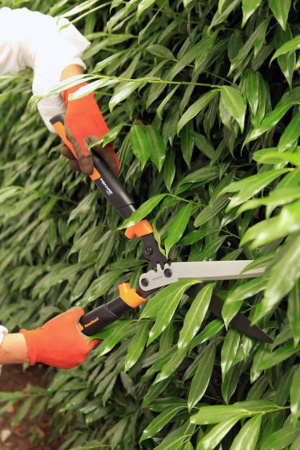 Hedge-Pruning-101-10.jpg