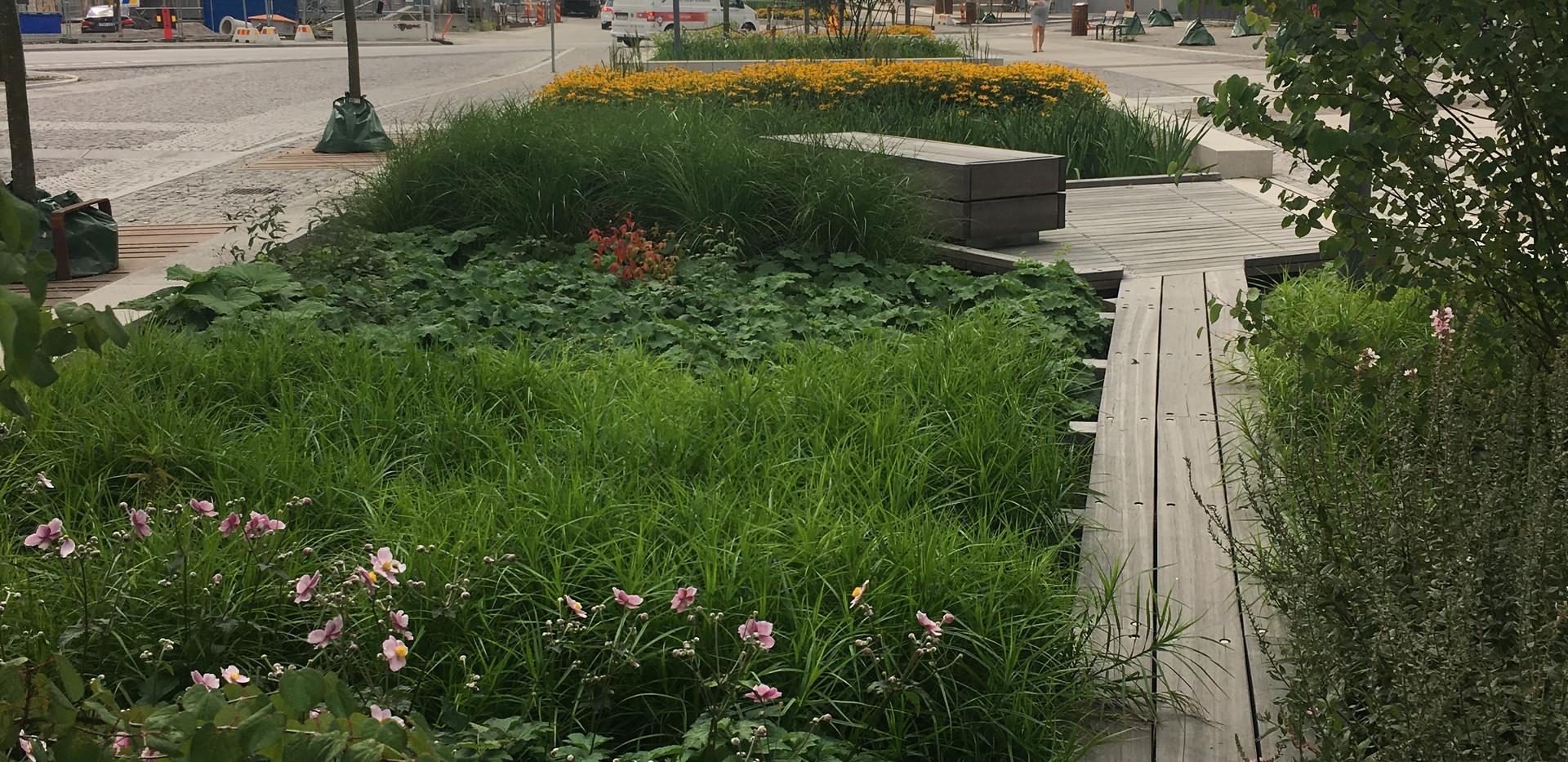 Plantering_Norra_Djurgårdsstaden(1).jpe