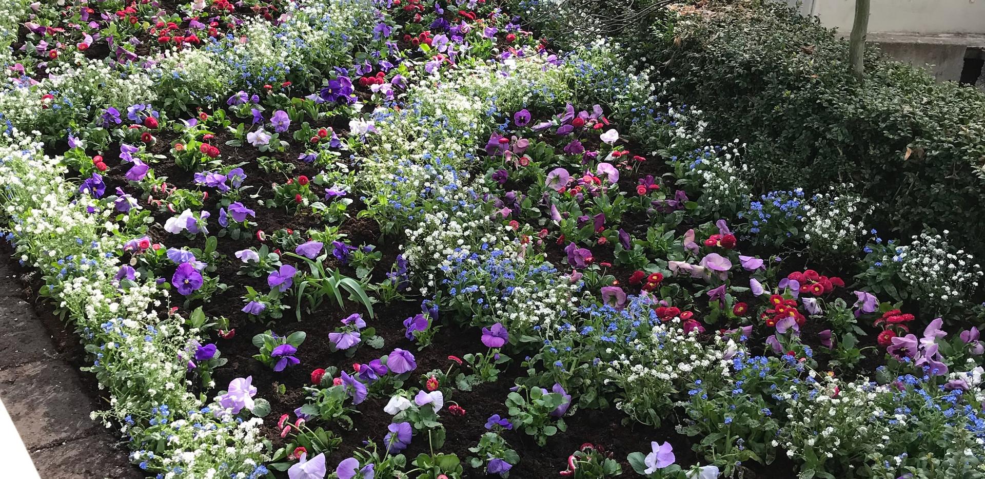 Gröna_lund_plantering(7).jpeg