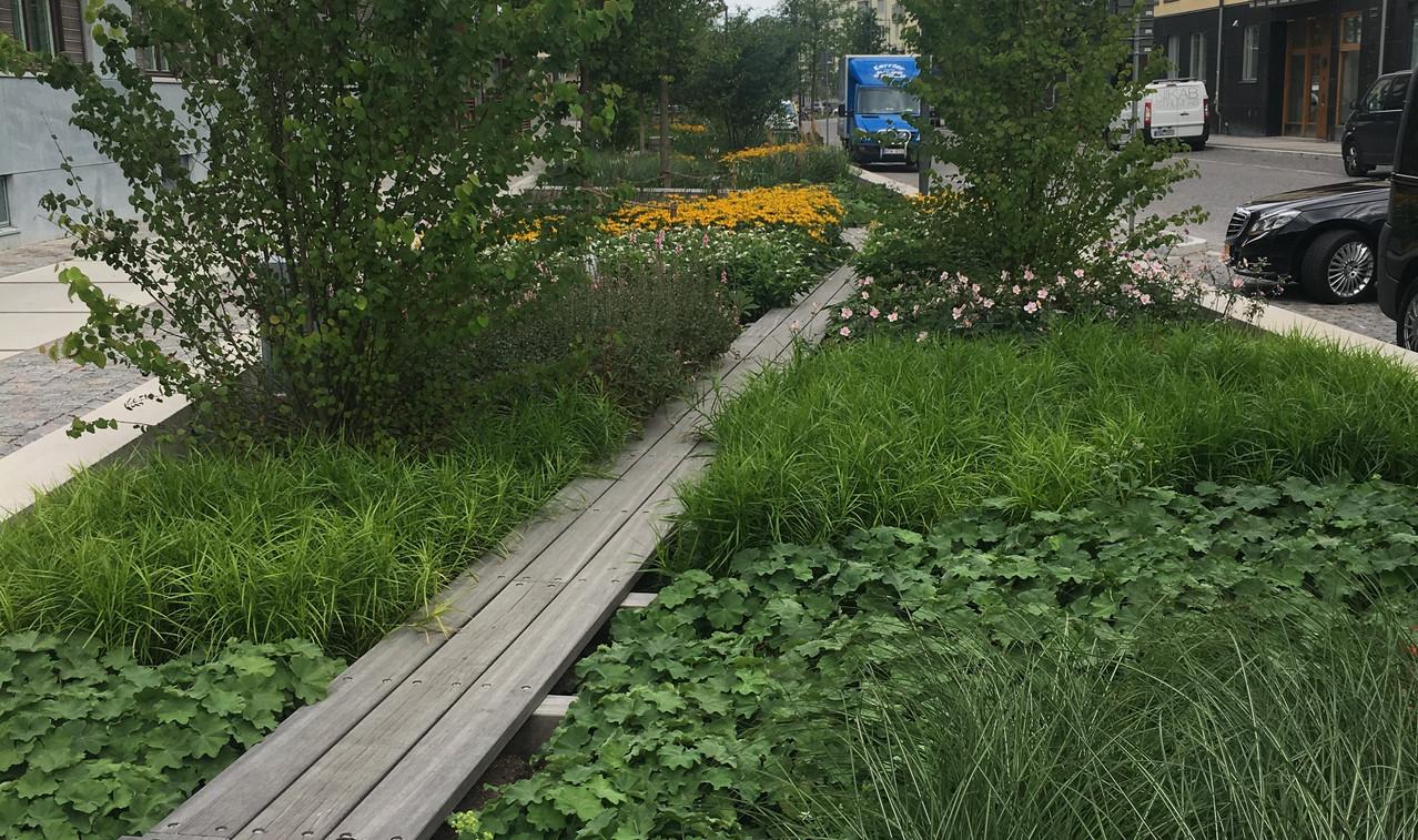 Plantering_Norra_Djurgårdsstaden.jpeg