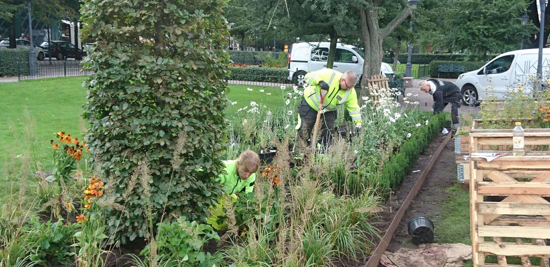 Kungsträdgården_plantering(2).jpg