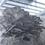 Thumbnail: Phoenix Oyster Big Boy - Ready to Fruit Block