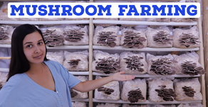 How to be a Successful Small Scale Mushroom Farmer