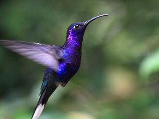 Tips for Better Backyard Birding