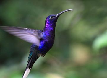 יונק דבש או צופית - מה המשמעות והסמליות של הציפורים בחיינו?
