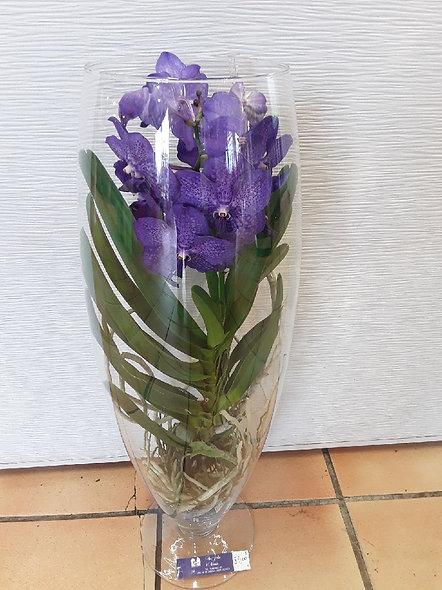 vanda  (orchidées )dans son vase
