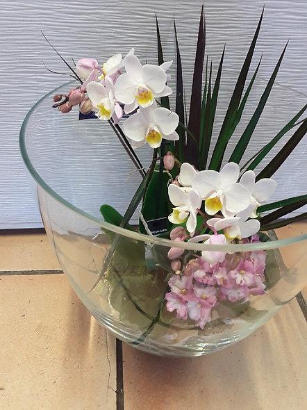 orchidées avec plantes variées