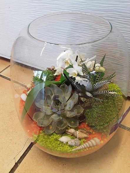 globe plantes vivaces et orchidées