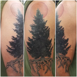 Cover up  - Tree