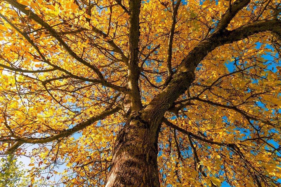 Árvore outono