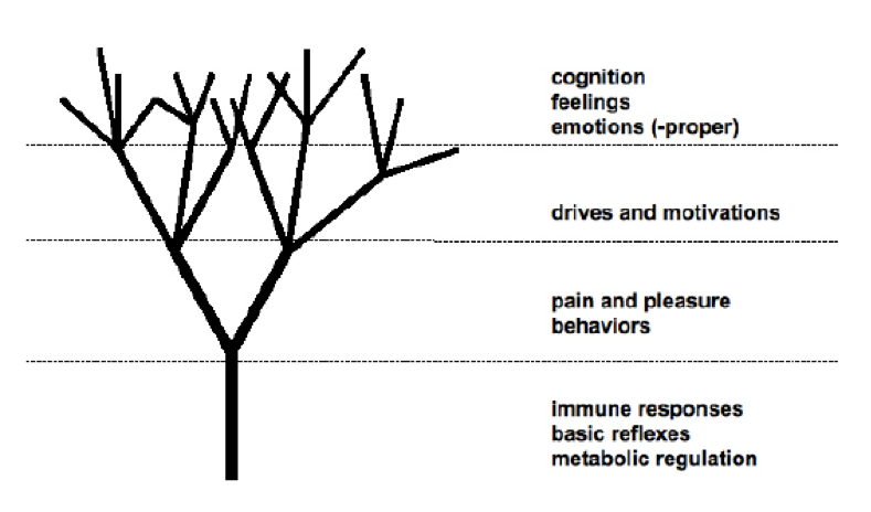 Neuroarchitecture And The Role Of Emotions