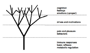 Levels of automated homeostatic regulation, from simple to complex. (Damásio, 2003, p.32)