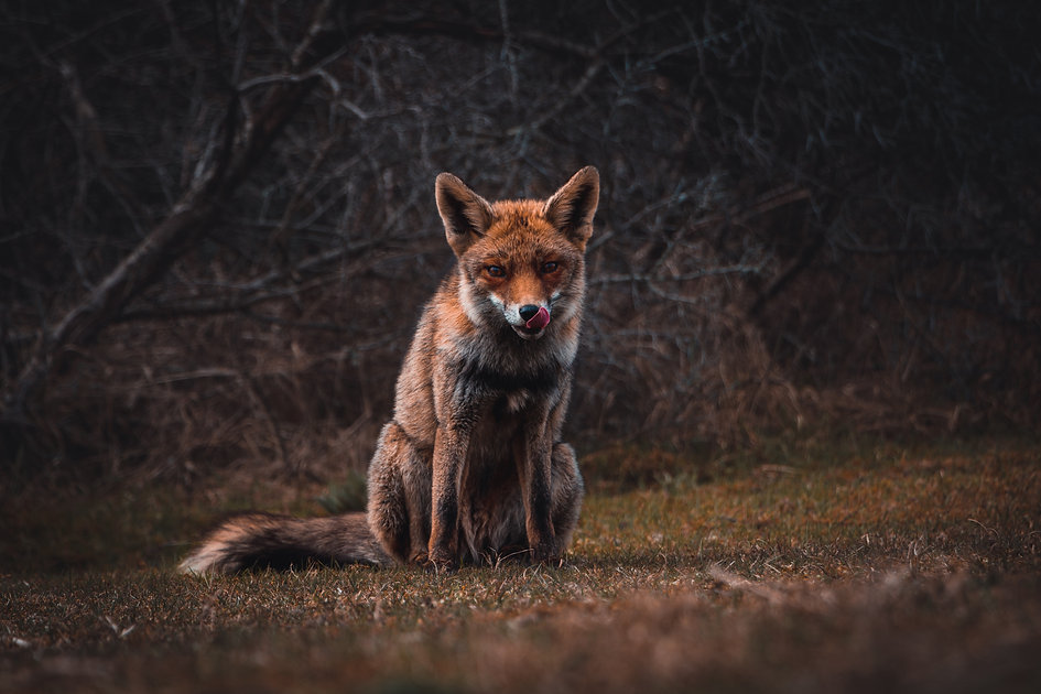 Fight Club Fox