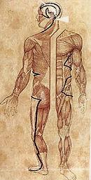 galleblære-meridian kinesisk medisin