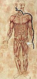 tykktarm-meridian kinesisk medisin