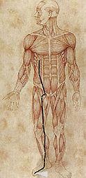 lever-meridian kinesisk medisin