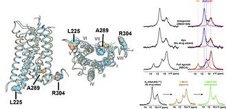 A2AAR GPCR NMR