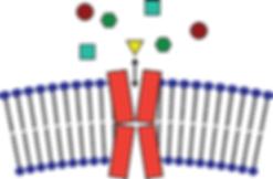 GPCR_drug_discovery_website_v3.png