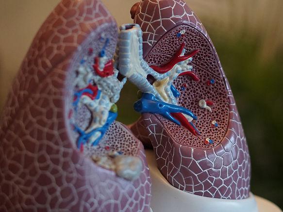 Cardiology Photo